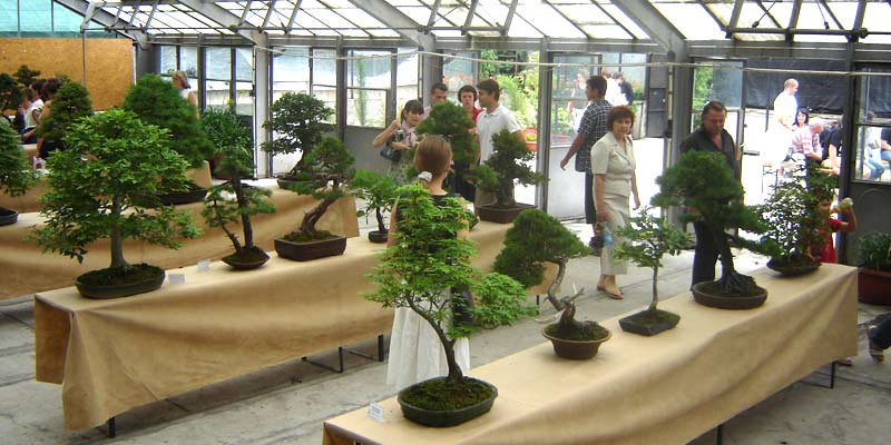 http://www.bonsai.pl/grafika/relacje/botaniczny/1.jpg